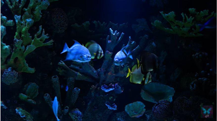 Aquarium 100 BPM Kick bass
